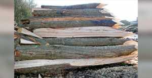 Heroult Bois et Débit | scierie près de Sannerville